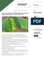 Aloe contro Tumori e malattie_ Diffusa la ricetta del gel miracoloso da fare a casa senza costi - Rete News 24 | Rete News 24