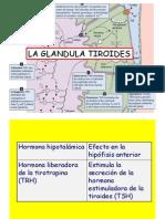 5 Tiroides.pdf