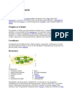Cloroplast teorie.doc