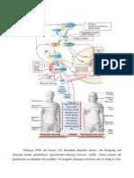 Patofis Hipogonadisme Pd Pria