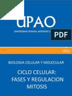13_ Ciclo Celular y Regulación.pptx