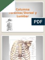columna toracica (mi version).pptx