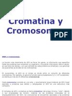 cromatina_y_cromosomas.ppt