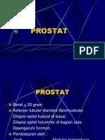PROSTAT1 patologi anatomi