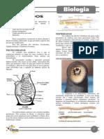 Capítulo 13 - Cordados.pdf
