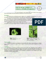 Echo-fiche 7-Les pucerons.pdf