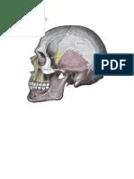 osteologia.docx