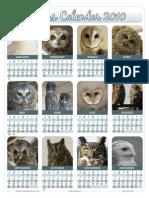 Hoot Owls Calendar 2010