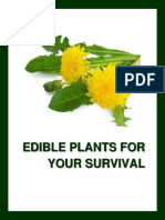 A Basic Guide to Edible Plants
