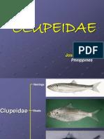 08-Clupeidae.ppt