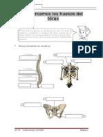 Conozcamos los huesos del tórax-André.doc