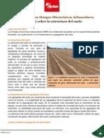 NT_Actividad_de_los_Hongos_Micorrizicos_Arbusculares__HMA__sobre_la_estructura_del_suelo.pdf
