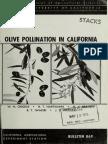 olive pollination in california.pdf