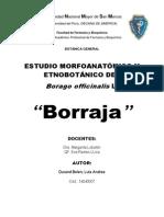 Monografia de borraja.docx