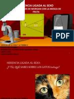 herencia_ligada_al_sexo_morgan1409.pptx