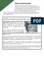 Palomas (1).docx