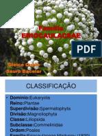 Família ERIOCAULACEAE.ppsx