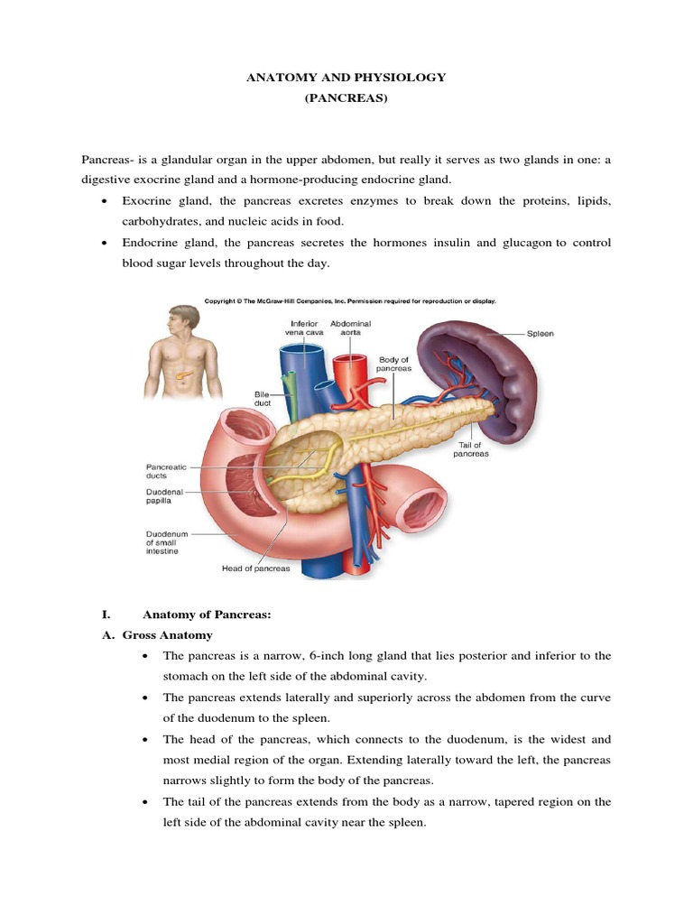 Anatomy and Physiology | Pancreas | Digestion