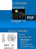 Chapter 14 The Human Genome student.ppt