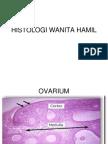 Histologi Wanita Hamil