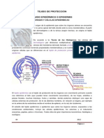 5._tejidos_de_proteccin_1rio_cel_epidrmicas.pdf