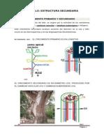 18._estructura_secundaria_del_tallo.pdf
