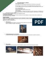 ESCULTURA Y PINTURA  BARRROCA.pdf