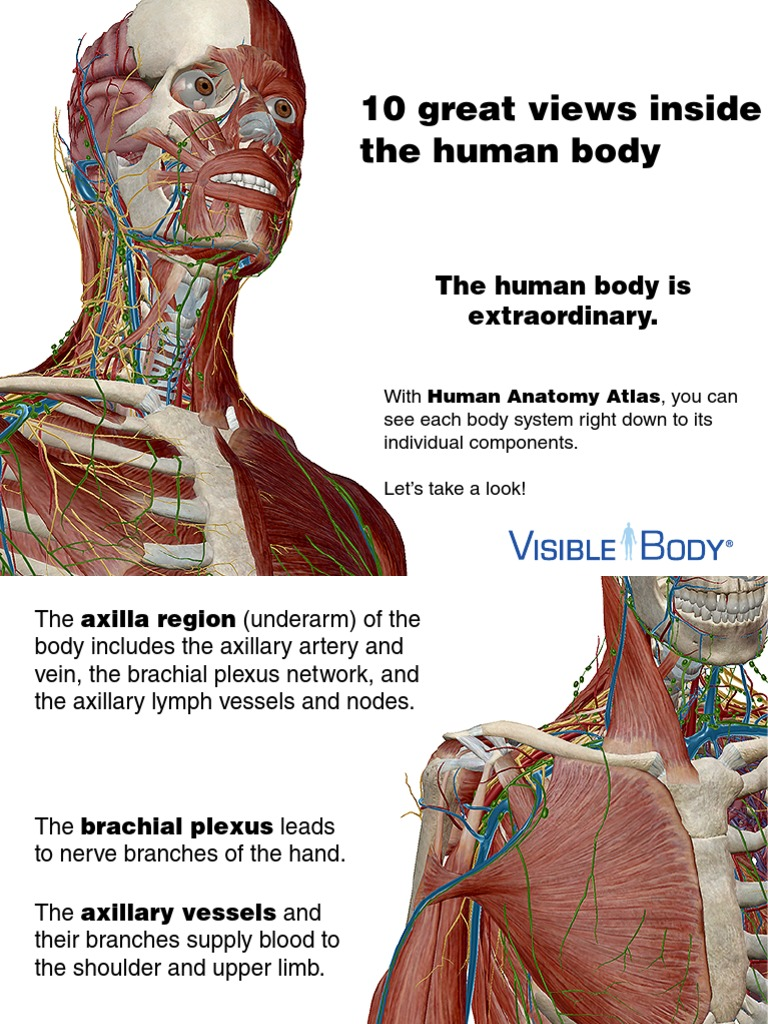 Anatomy Atlas Preview Lymphatic System Human Body