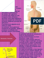 Sistema Digestivo.pptx