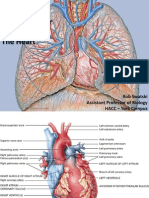 heart anatomy and physiology.pdf