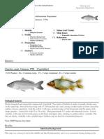 FAO Fisheries & Aquaculture - Cyprinus carpio (Linnaeus, 1758)