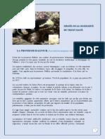 Israel ou la naissance du tricot rayé.pdf