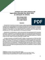 Análisis cuantitativo del cultivo intensivo del Bagre blanco en estanques de cemento-MVZ 1998.pdf