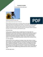 PICADURA DE ARAÑA.docx