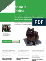 AV_23_Prevención de la obesidad felina