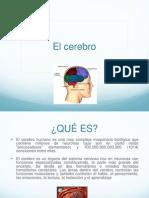 cerebro ( ELIOT BUENO GODINEZ Y BRIANS GUERRERO GUEVARA ).pptx