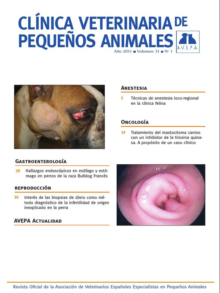 clinica veterinaria de pequeños animales.pdf