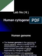 lab6 cytogenetics.ppt