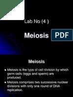 lab4miosis.ppt