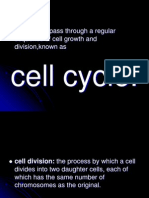 lab1 mitosis.ppt