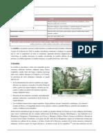 Cumbia.pdf