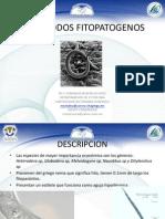 NEMATODOS-.pptx