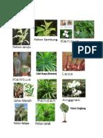 Tumbuhan Dikotil Dan Monokotil