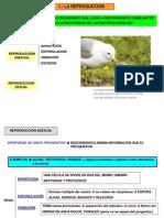 Unidad_3_Herencia.pdf