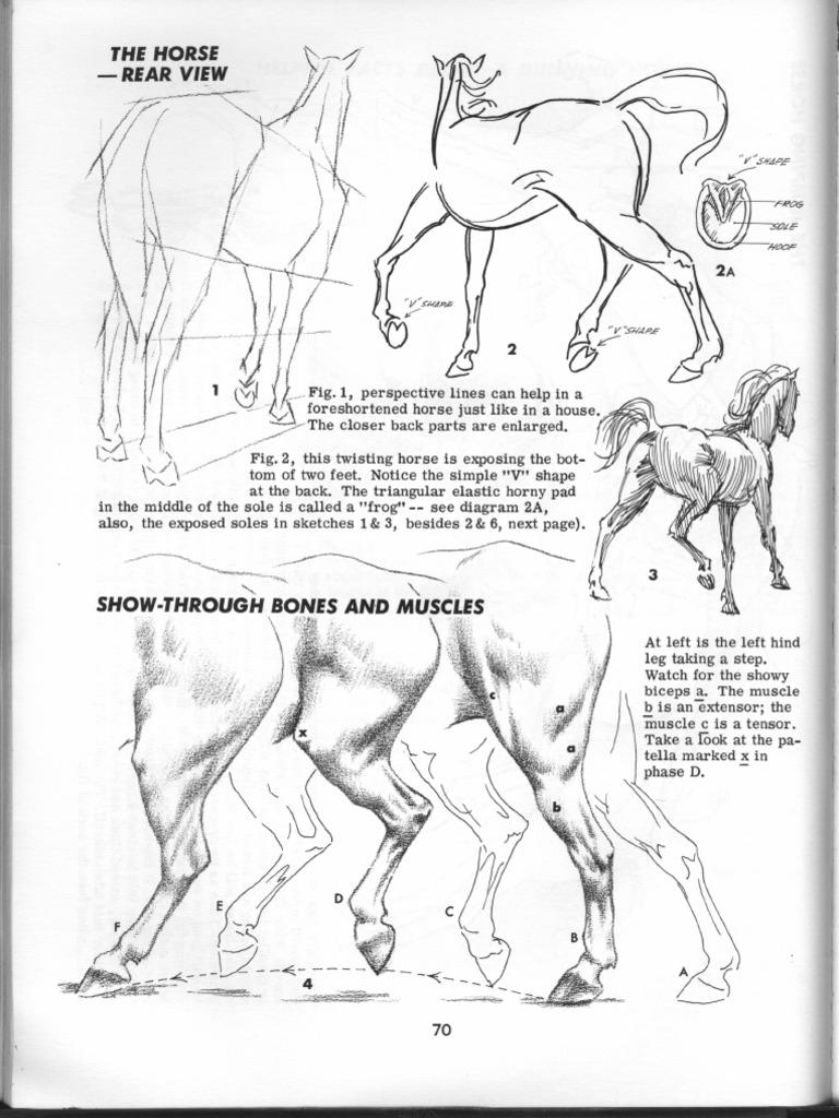 How To Draw Animals By Jack Hamm Pdf