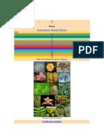 Las Plantas.pdf