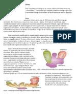 classificação dos seres vivos.pdf