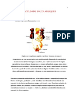 POWER POINT DE SISTEMA REPRODUTOR MORFOLOGIA.doc