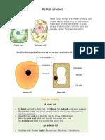 02 Cells Biology Notes IGCSE 2014