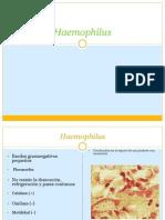 4Haemophilus.pptx